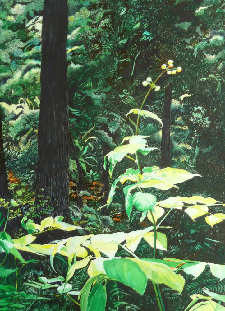 Balaram, Under The Canopy